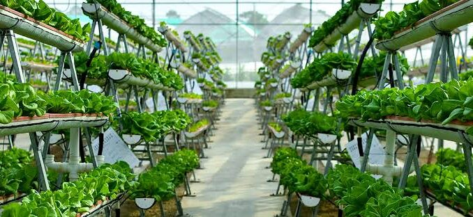 Indoor Farming Technology